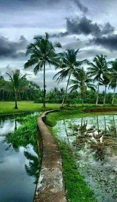 My beautiful and natural village life