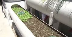 Automated Aquaponics for Business or Pleasure: A Scalable Approach