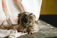Western Screech Owl, Bird, Animals, Animales, Animaux, Birds, Animal, Animais