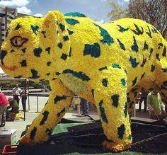 Feria de las flores 2014 Holland, Dinosaur Stuffed Animal, Animals, Flower, Colombia, Cities, Dutch Netherlands, Animales, Animaux