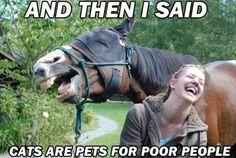 funny-horses-cats-are-pets-for-poor-people.jpg 620×416 piksel