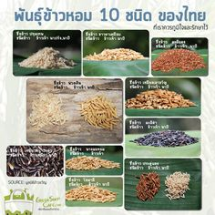 พันธุ์ข้าวหอม 10 ชนิด ของไทย  ที่เราควรภูมิใจและต้องรักษาไว้ [Green Story]
