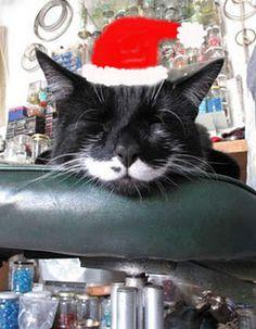 Happy Christmas Kitty