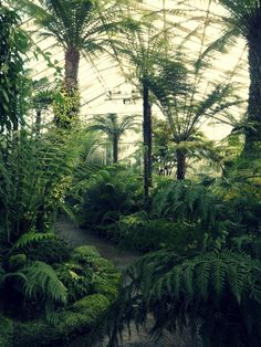 The Fern Glasshouse at Royal Botanic Garden Edinburgh