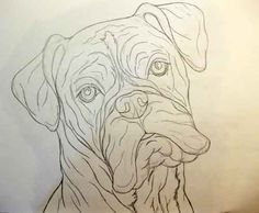 Gallery For > Boxer Dog Head Drawing