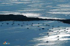 Pantera bay, Dugi otok, Croatia