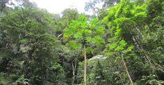 Neuveriteľné! Po 42 rokoch objavili vo vietnamskej džungli otca so synom! Viac sa dočítate na: http://www.dobrenoviny.sk/c/51701/po-42-rokoch-objavili-vo-vietnamskej-dzungli-otca-so-synom  #džungľa #jungle