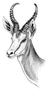 Image result for springbok sketch Pyrography, Sketch, Image, Sketch Drawing, Sketches, Woodburning, Tekenen, Draw