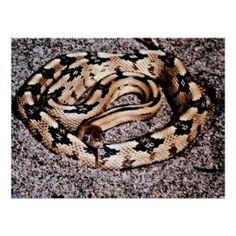 Rat+Snakes+in+Louisiana