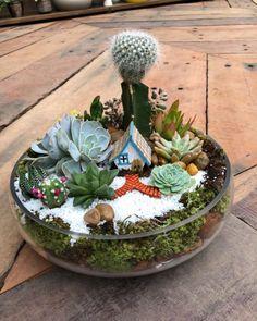 Garden Projects, Succulent Terrarium, Garden Terrarium, Garden Decor, Cactus Garden, Fairy Garden Pots, Cacti And Succulents, Japanese Garden, Succulent Garden Diy