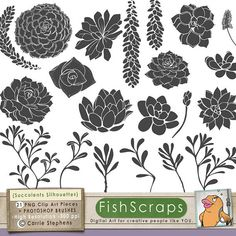 Succulent Clip Art  Hens & Chicks Clip Art, PNG Silhouettes & Photoshop Brushes  by FishScraps on Etsy, $5.75 - Personal and Commercial Use (Small Business)