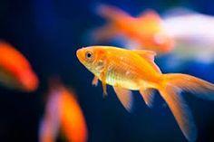 Afbeeldingsresultaat voor vissen
