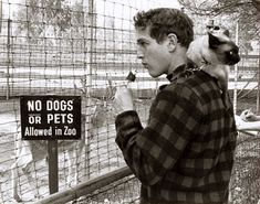 paul newman + friend -I had a Siamese cat that did this same thing-wish I had Paul Newman too.