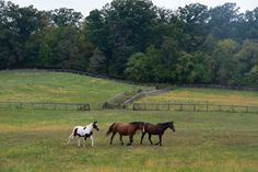 My Horse Country - The New York Times. Thanks to Jane Smiley, Jane Beiles Photography, and NY Times Travel. My Horse, Horses, New York Times Magazine, Racehorse, Recent Events, Trail Riding, Horse Farms, Ny Times, Us Travel