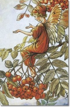 Mountain Ash Fairy-Cicely Mary Barker The Flower Fairies of the Autumn was first published in These prints are from First or early editions of this work. Each Flower Fairy print is accompanied with a copy of the poem authored by Cicely Mary Barker. Cicely Mary Barker, Vintage Fairies, Vintage Flowers, Flower Fairies Books, Autumn Fairy, Fairy Pictures, Beautiful Fairies, Fantasy Illustration, Tree Illustration