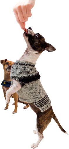 Chakacoco - small dog fashion