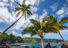 Threesome by sbhat3  Coconut tree Hana beach beautiful beauty blue clouds green hawaii maui ocean rocks sand sea seascape