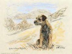Border Terrier in a field