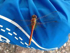 reportage per la libellula a Saliceto