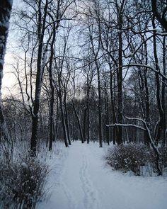 Snow Scenes, Winter Scenes, Winter Photography, Nature Photography, Winter Love, Winter White, Winter Christmas, Christmas Pics, Artsy Photos