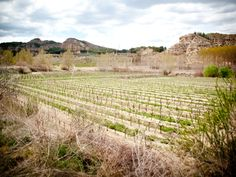the vineyards of antonio vilchez in granada province, spain, where we visited for a tasting and tour