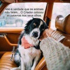 <3 <3 <3 #petmeupet #amoanimais #cachorro #gato #filhode4patas #maedepet #maedecachorro #maedegato #paidecachorro #paidegato