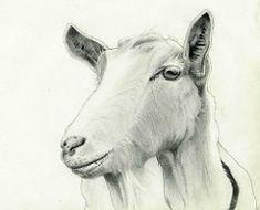 My goat, Georgia. Animal Drawings, Pencil Drawings, World Best Photos, Moleskine, Art Inspo, Goats, Georgia, Moose Art, Horses