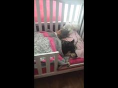 Every dog should have a crib... Maybe share it too! #loveTails