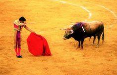 Tüm Yenilmişlerin Temsil Edildiği Bir Arena – Boğa Güreşleri (El Toro) Cow, Animals, Animales, Animaux, Cattle, Animal, Animais