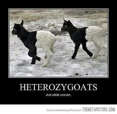 Olha esses Janaína! Heterozigotos ~~> fazendo isso errado!