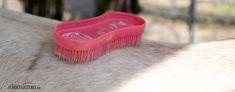 Pferd richtig putzen: Die wichtigsten Do's und Dont's für ein sauberes und glückliches Pferd