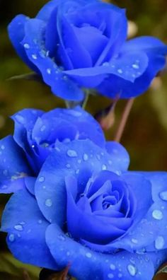 exotic flowers and decorations Beautiful Flowers Wallpapers, Beautiful Rose Flowers, Rare Flowers, Flowers Nature, Exotic Flowers, Amazing Flowers, Purple Flowers, Purple Rose, Blue Flower Wallpaper