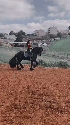 Fjord Horse, Horse Videos, Funny Horses, Horse World, Breyer Horses, Horse Pictures, Horse Photography, Horse Racing, Make Me Smile