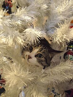 Hiding in a Christmas tree of white