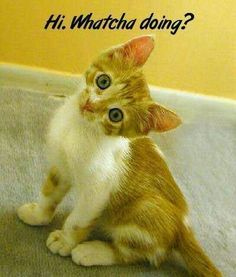Funny Pictures with Funny Captions Funny Pictures With Captions, Funny Captions, Cute Animal Pictures, Funny Images, Bing Images, Picture Captions, Funny Photos, Animal Captions, Baby Animals