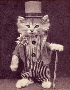 vintage cat photo Like a sir I Love Cats, Crazy Cats, Cool Cats, Little Kittens, Cats And Kittens, Cats In Hats, Gato Steampunk, Gatos Cats, Matou