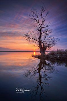 lone Tree - Kociewie, Polska (Poland)
