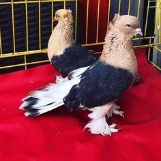Happy Family, Pigeon, Bald Eagle, Pakistan, Bird, Animals, Instagram, Animaux, Animales