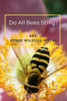 Plus other wildlife feeding myths. Are you confused about feeding birds and hedgehogs, Do you want to help our bees survive? Find out here.. #BirdFeeding #HedgehogFeeding #Nature #Hedgehogs #Bumblebees #Honeybees #Wildlife #CountryLife WildlifeFeedingMyths Feeding Birds, Bee Sting, Natural Lifestyle, Hedgehogs, Natural Living, Dog Art, Country Life, Confused, Bird Feeders