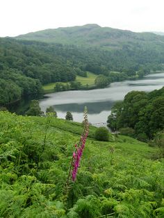 Grasmere, Lake District, Cumbria, England. Our tips for 25 fun things to do in England: http://www.europealacarte.co.uk/blog/2011/08/18/what-to-do-england/