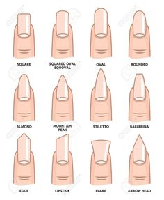 Illustration of Different nail shapes Fingernails fashion Trends vector art clipart and stock vectors. Image The post Illustration of Different nail shapes Fingernails fashion Trends vector art c appeared first on nageldesign. Best Acrylic Nails, Summer Acrylic Nails, Spring Nails, Squoval Acrylic Nails, Nail Shapes Squoval, Fall Nails, Acrylic Nails Almond Short, French Tip Acrylic Nails, Wedding Acrylic Nails