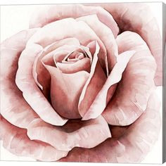 Metaverse Pink Rose Ii By Grace Popp Framed Art Home - Macy's Plant Drawing, Rose Art, Canvas Artwork, Framed Artwork, Art Prints, Flower Drawings, Drawing Flowers, Pencil Drawings, Roses Painting Acrylic