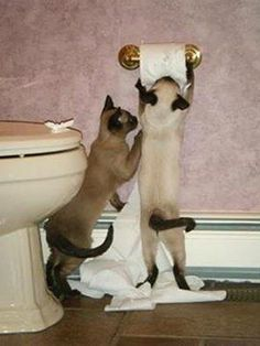 """""""We are Siamese, if you please..."""""""