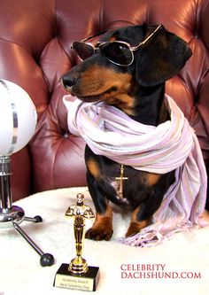 Bloggies Award - Best Dog Blog - Click to read my new post!