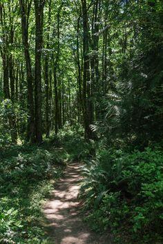 Soaring Eagle Regional Park, Sammamish, WA - John Westrock