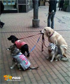 #chien #colliers #laisses #animalerie #zoomalia http://www.zoomalia.com/animalerie/collier-laisse-harnais-pour-chien-c-25-1.html