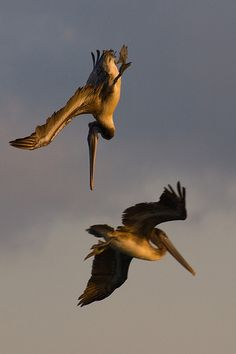 Pelican Crossing by Your Funny Uncle, via Flickr