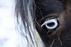 Have a brown horse with blue eyes