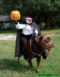 The Headless Dogman... pets love Halloween too!