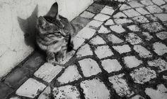 Sozinho no Mundo - Alone in the World